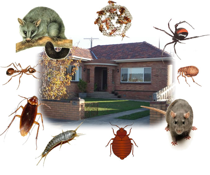 Kamloops home pests